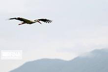 تالابهای همدان برای میزبانی از پرندگان مهاجر آماده است