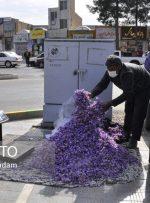 تجارت خیابانی گرانترین گل جهان