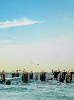 وجود فلزات سنگین در سواحل جزیره کیش