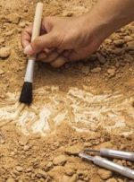 زنگ خطرِ حراجِ میراثمان به صدا درآمده/لزوم ایجاد سازمان باستانشناسی در کشور