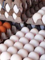 سخنگوی وزارت جهاد کشاورزی: گرانفروشی مرغ و تخم مرغ به ما ربطی ندارد