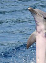 شخصیت دلفینها شبیه به انسان است!