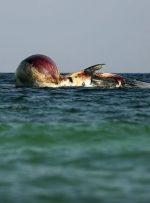 زخم ناسورِ خلیجفارس