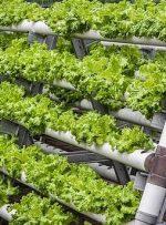 ساخت پارک جدید در دوبی برای کشاورزی عمودی