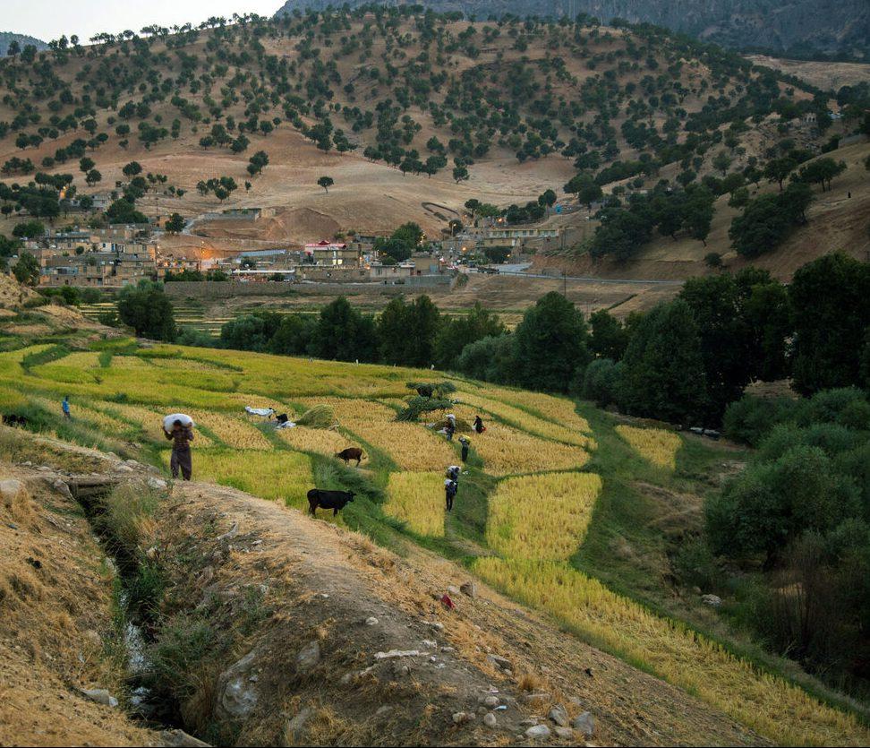 اجرای طرح کاداستر در ۱.۴ میلیون هکتار از اراضی کشاورزی تا پایان امسال