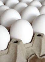 آیا تخم مرغ گران میشود؟