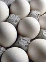 تخم مرغ ارزان شد؟